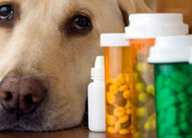 Hondenvitamines en supplementen: lees de feiten